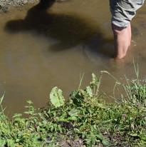 puis dans le ruisseau