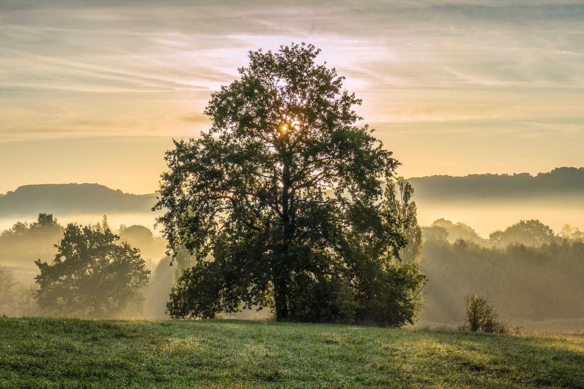 L'éveil, Tarn, France