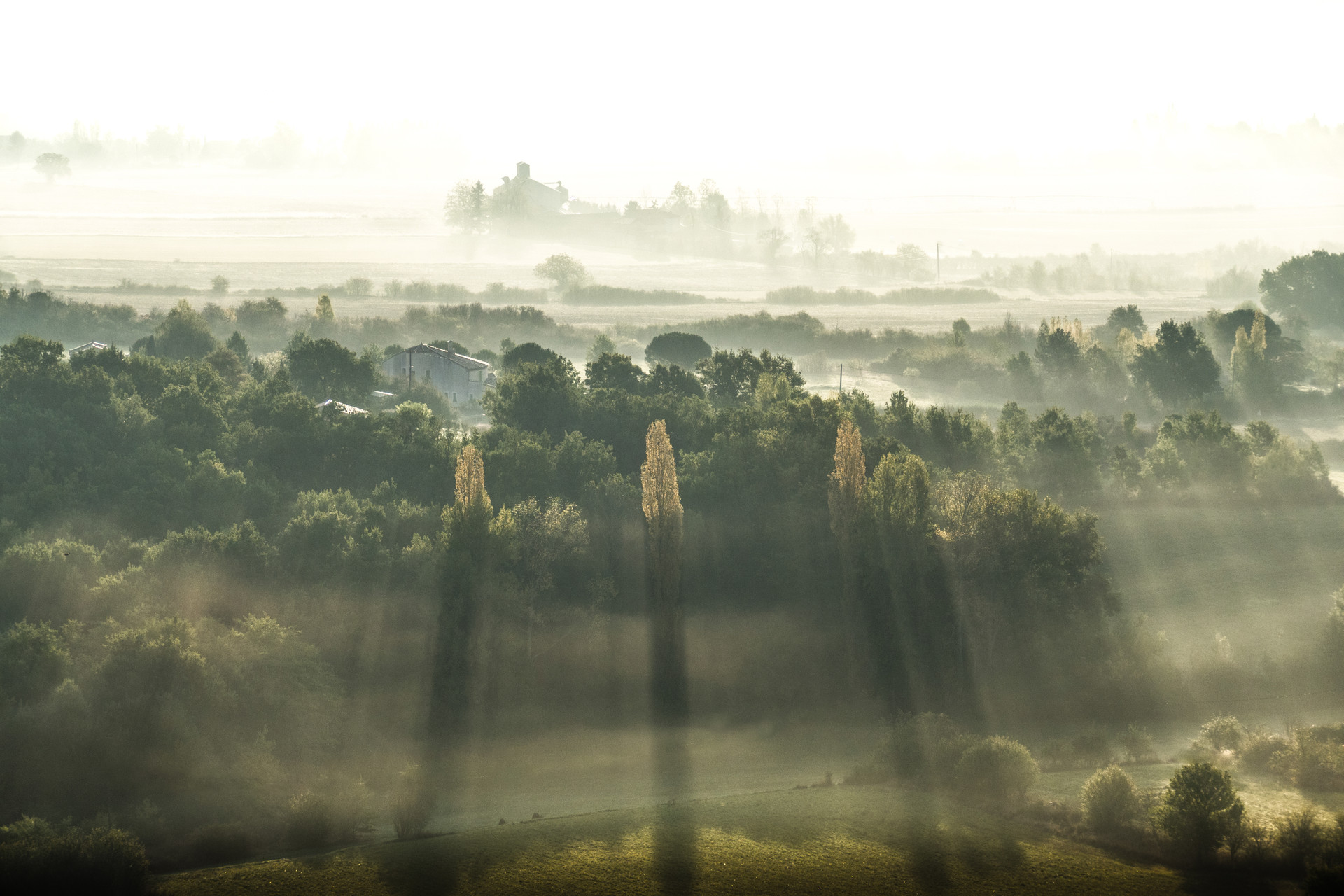 Brume matinale, Tarn, France