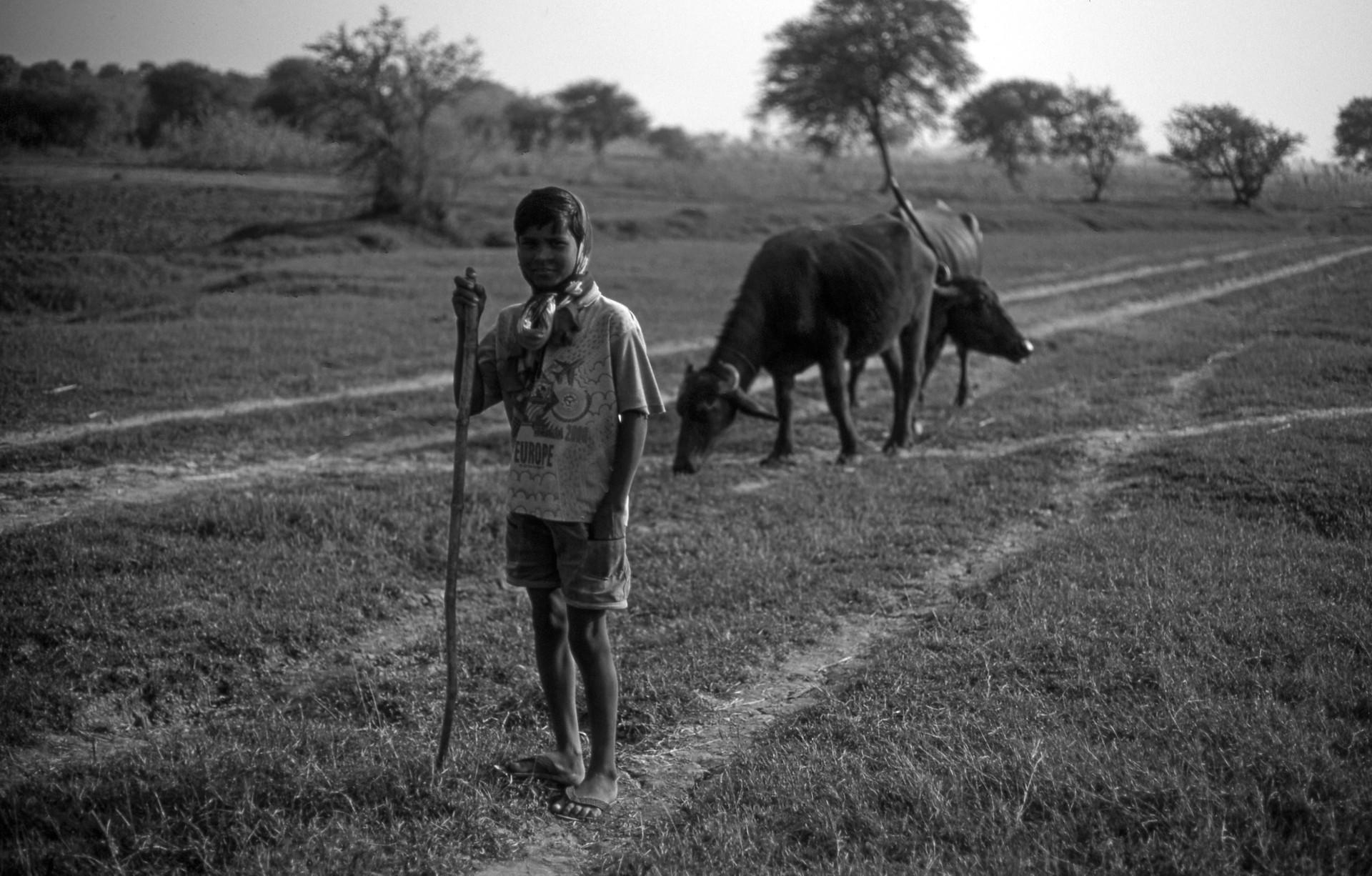 Jeune gardien de vaches