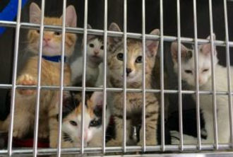shelter-cats-850x572-300x202.jpg
