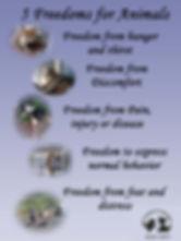5 Freedoms poster.jpg