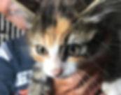 cat whisperer.jpg