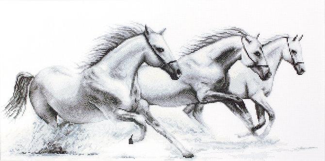 B495 White horses