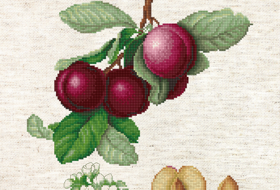 BA22480 The Nectarine Plum - Cross Stitch Kit Luca-S