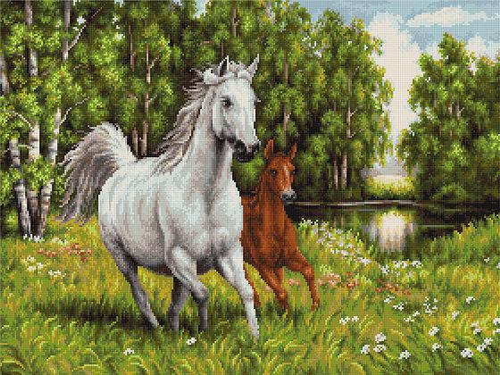 Horses in Freedom