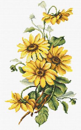 Flores - Rudbeckia