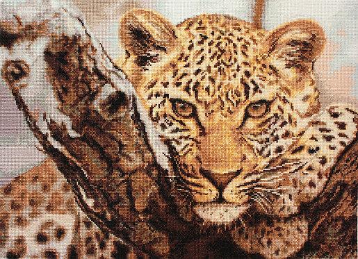 B525 Leopard
