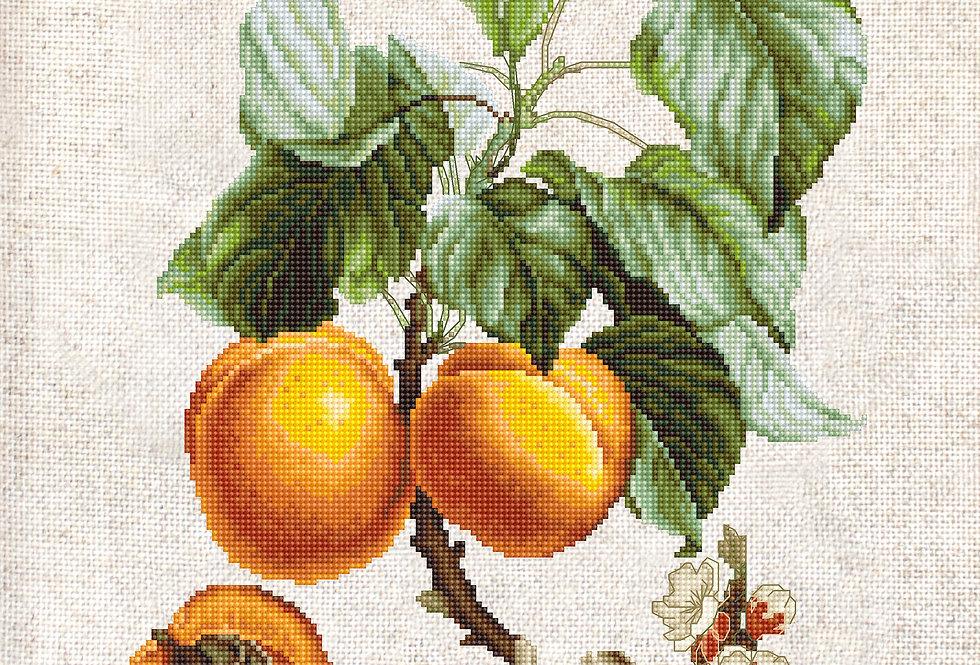 BL22450 Abricot-Peche - Cross Stitch kit Luca-S