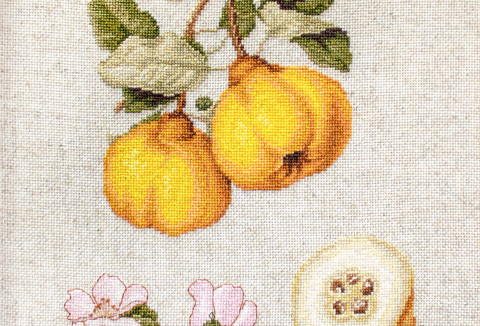 BL22430 The Pear shaped Quince - Cross Stitch Kit Luca-S