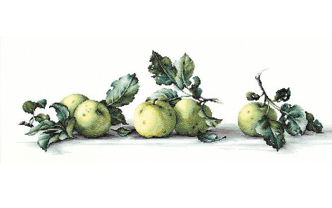 Still life of apples