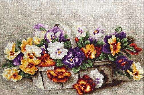 B503 Basket of pansies