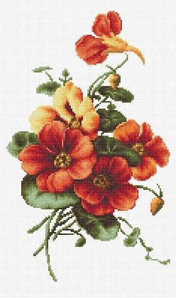Flores - Lavatera