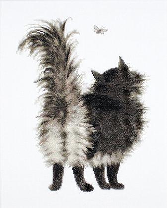 Shushun kitten