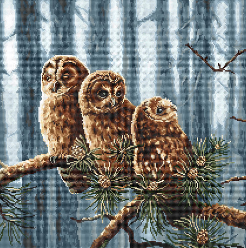 LETI 946 Owls family