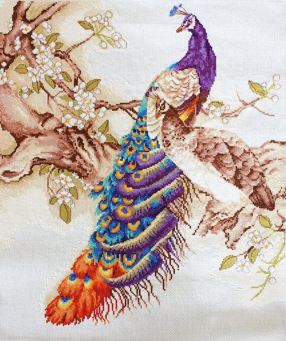 B459 Peacocks