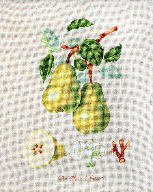 BL22420 The Dauch Pear