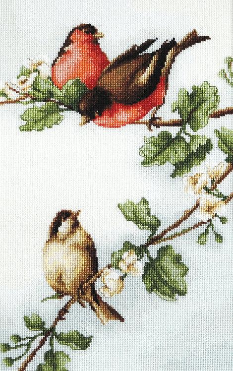 B216 Birds