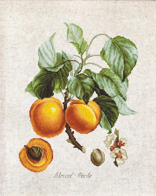 BL22450 Abricot-Peche
