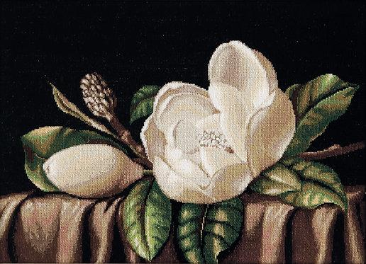 G484 Magnolia