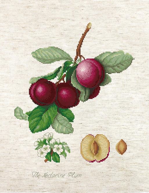 BL22480 The Nectarine Plum