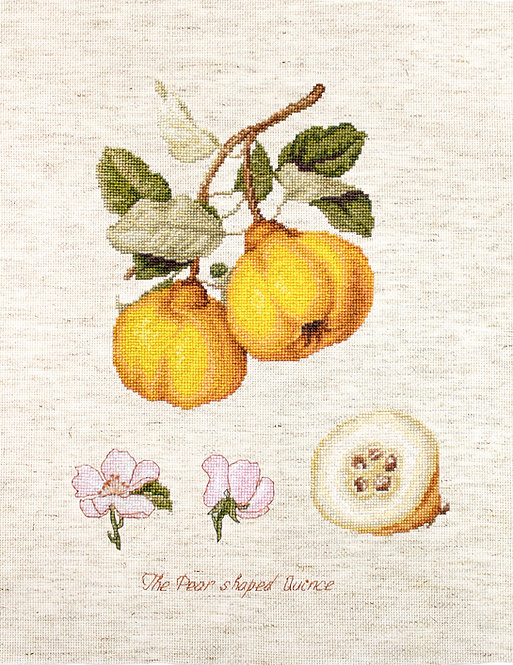 BA22430 The Pear shaped Quince -Luca-S - Kit de Punto de Cruz