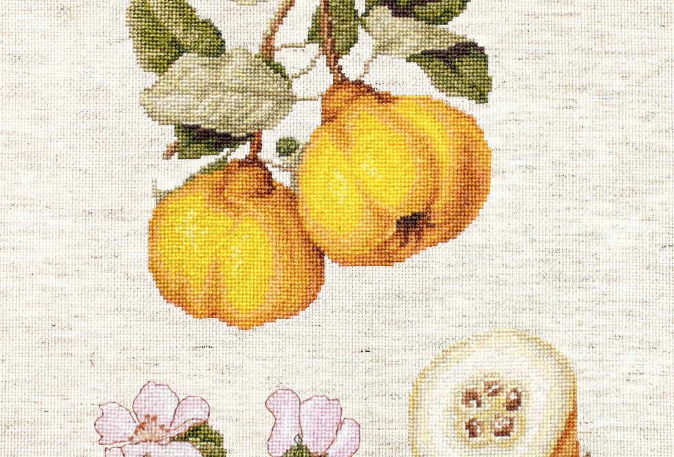 BA22430 The Pear shaped Quince - CrossStitch Kit Luca-S