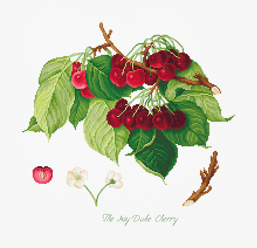BA22460 The May Duke Cherry - Luca-S - Kit de Punto de Cruz