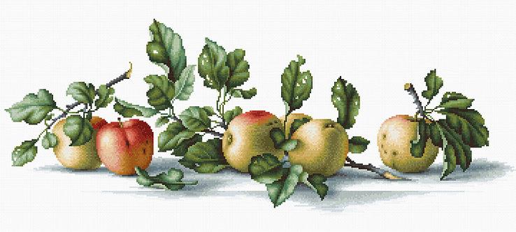 B2265 Apples