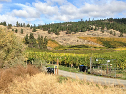 A Naramata vineyard