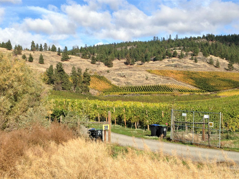 A Naramata vineyard