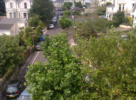 Human vs Trees in the Urban area