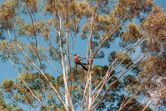 TreelandsBusinessBranding-WEBRES-98.jpg
