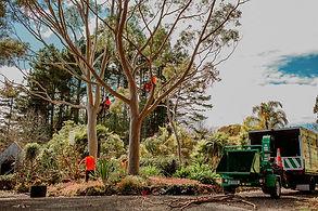 TreelandsBusinessBranding-WEBRES-123.jpg