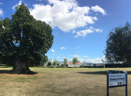 Te Awamutu veteran trees that have seen it all!