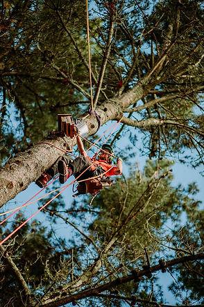 TreelandsBusinessBranding-WEBRES-35.jpg