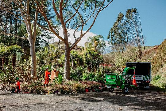 TreelandsBusinessBranding-WEBRES-190.jpg