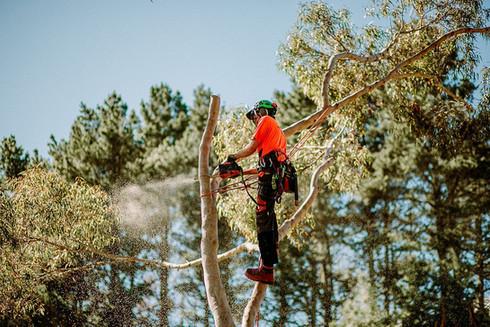TreelandsBusinessBranding-WEBRES-235.jpg