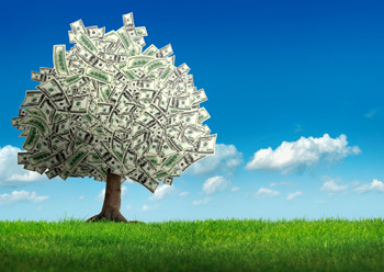 How investing in your trees could save and possibly make you money!