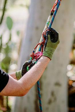 TreelandsBusinessBranding-WEBRES-228.jpg