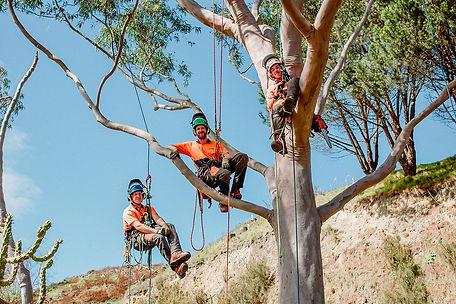TreelandsBusinessBranding-WEBRES-175.jpg