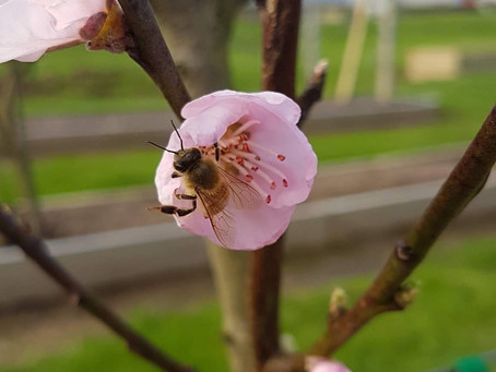Our 6 top tips for caring for your fruit trees
