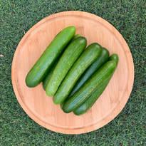 Pesticide-Free Cucumbers