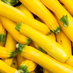 Zucchini - Yellow