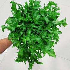 Pesticide-Free Frisee Lettuce