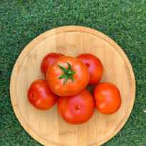 Pesticide-Free Tomatoes