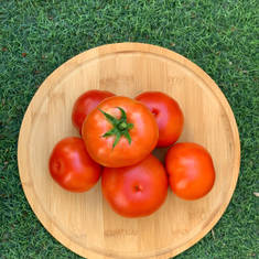 Pesticide-Free Tomatoes