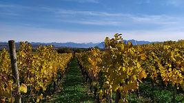 La région - Vignes Romanel-sur-Morges