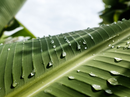 Myth about plant's feelings. Do plants cry?