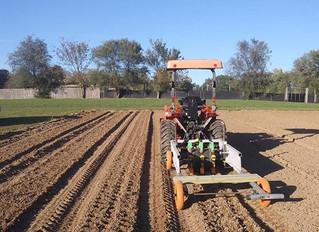 Planting Garlic in October